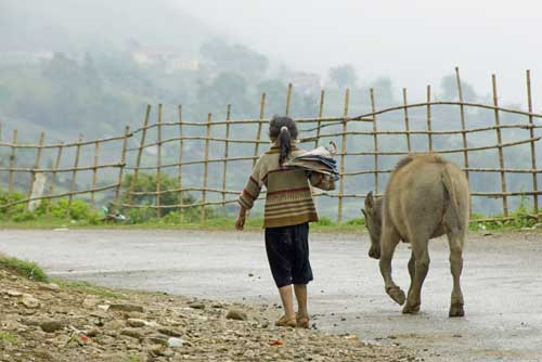 child with buffalo-AsiaPhotoStock