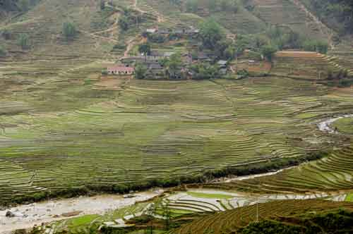sapa rice terraces-AsiaPhotoStock