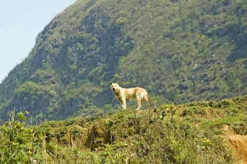 dog on hill-AsiaPhotoStock