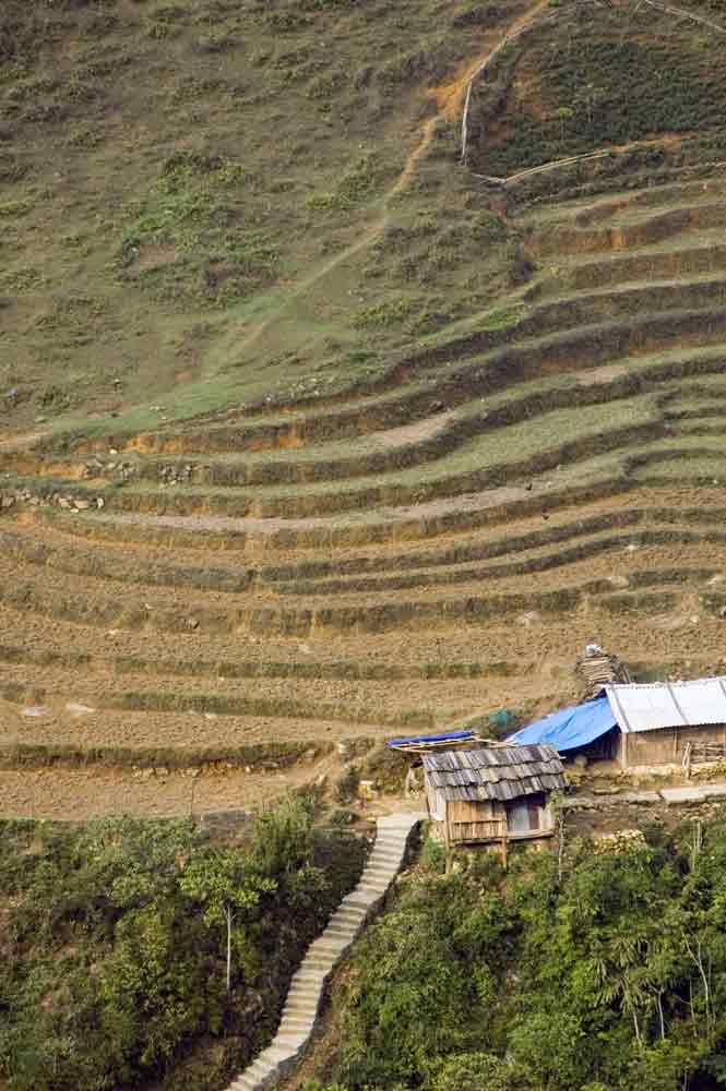 cat cat rice terraces-AsiaPhotoStock