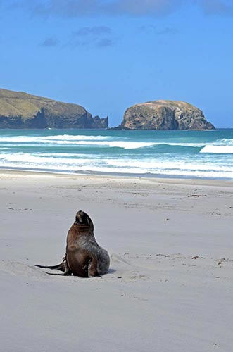allens sea lion-AsiaPhotoStock