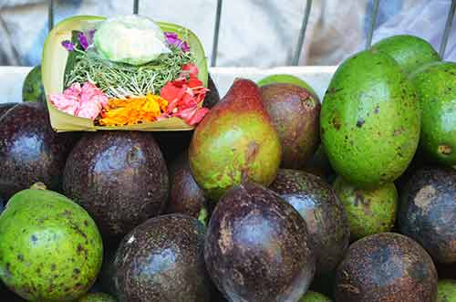 avocado offerings-AsiaPhotoStock