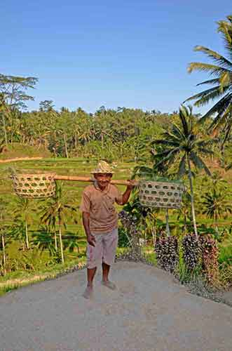 bali terracing man-AsiaPhotoStock