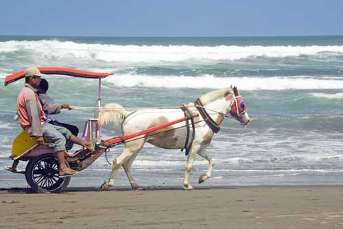 beach carriage-AsiaPhotoStock