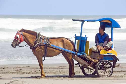 beach horse carriage-AsiaPhotoStock