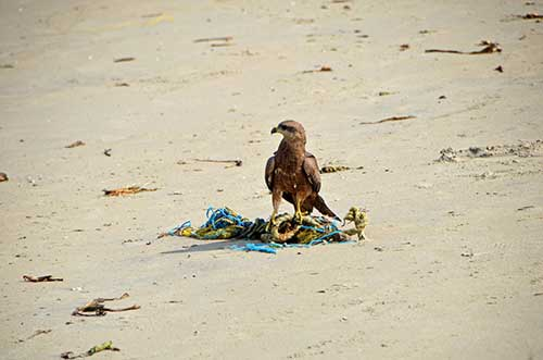 beach kite-AsiaPhotoStock