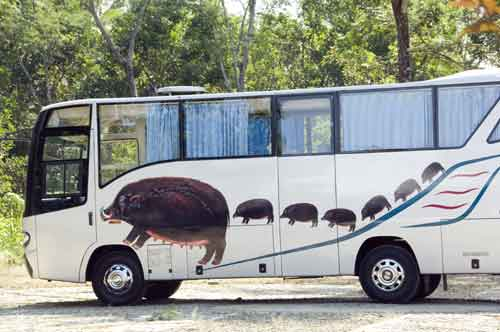 boar bus-AsiaPhotoStock