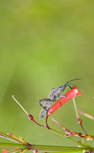 bug on red flower-AsiaPhotoStock