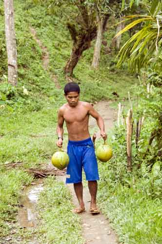 carrying coconuts-AsiaPhotoStock