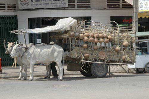 bullock cart and pottery-AsiaPhotoStock