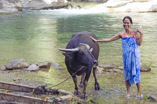 filipina and carabao-AsiaPhotoStock