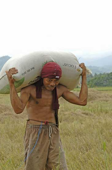 carrying rice-AsiaPhotoStock