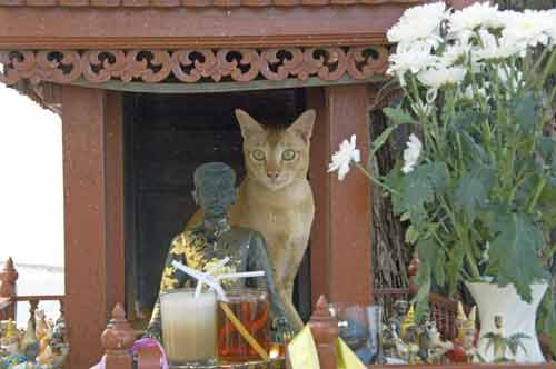 cat on shrine-AsiaPhotoStock