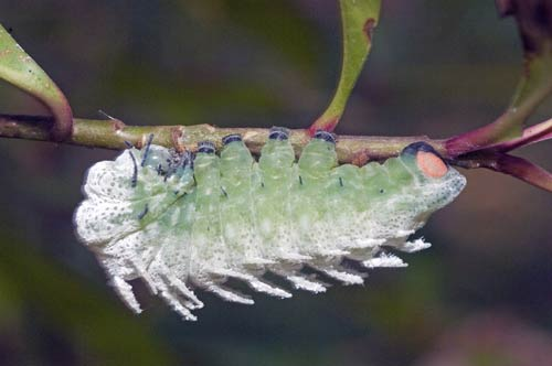 large caterpillar-AsiaPhotoStock