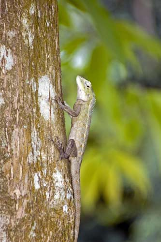 changing lizard-AsiaPhotoStock