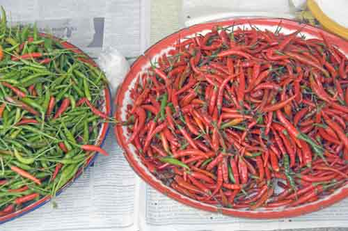 chilli spices-AsiaPhotoStock