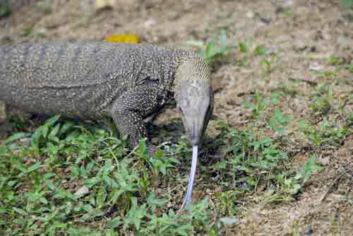 clouded monitor-AsiaPhotoStock