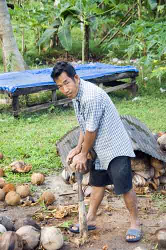 coconut shelling-AsiaPhotoStock