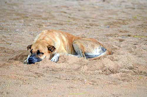 content dog on beach-AsiaPhotoStock
