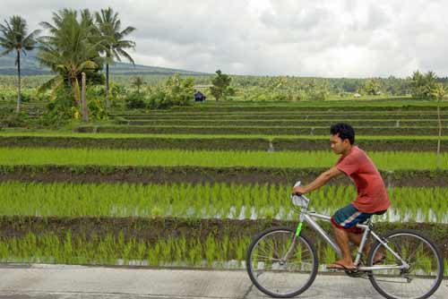 cyclist rice fields-AsiaPhotoStock