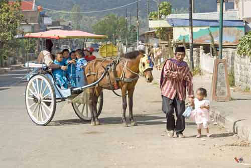 dieng carriage-AsiaPhotoStock