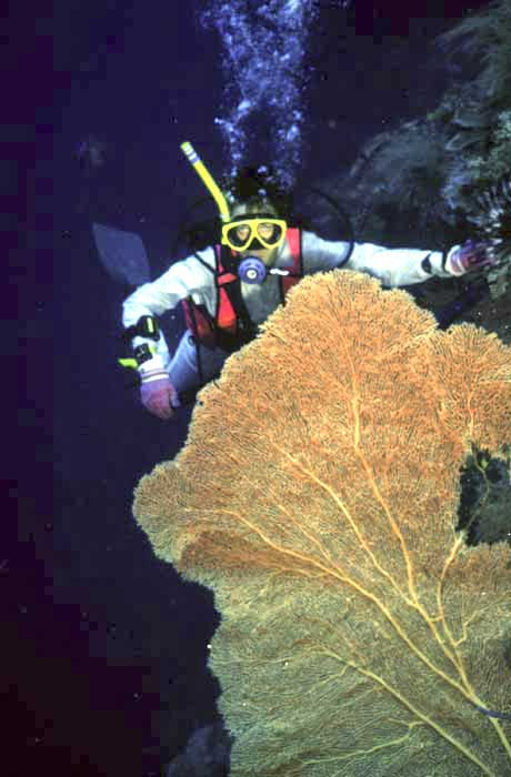 diver with fan coral-AsiaPhotoStock