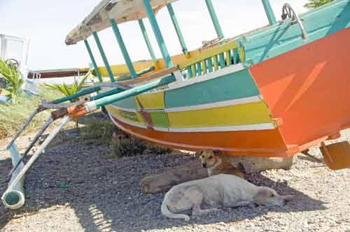 dogs in boat shade-AsiaPhotoStock