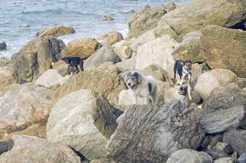 dogs on rocks-AsiaPhotoStock