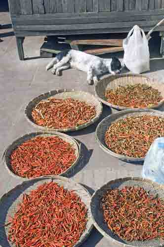 dog and chilli-AsiaPhotoStock