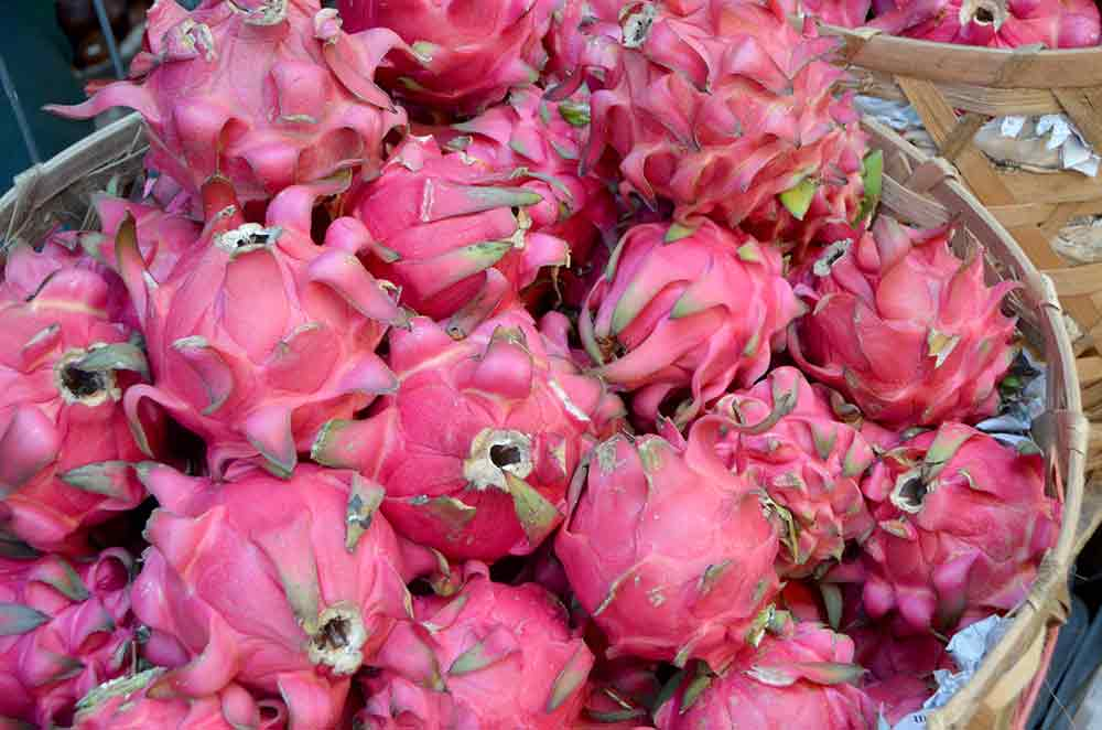 dragon fruits bali-AsiaPhotoStock