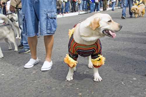 dog in fashion-AsiaPhotoStock