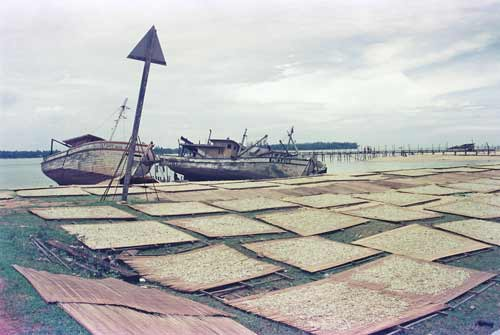 drying fish mersing-AsiaPhotoStock