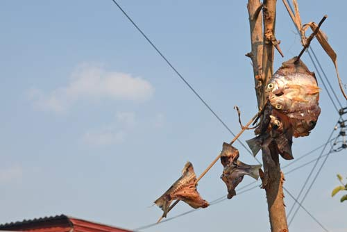 drying fish on wire-AsiaPhotoStock