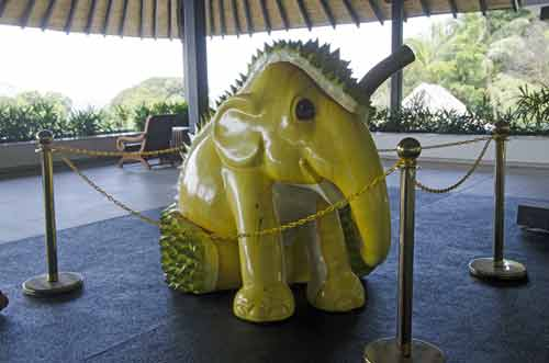 durian elephant-AsiaPhotoStock