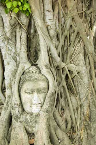 face in tree-AsiaPhotoStock