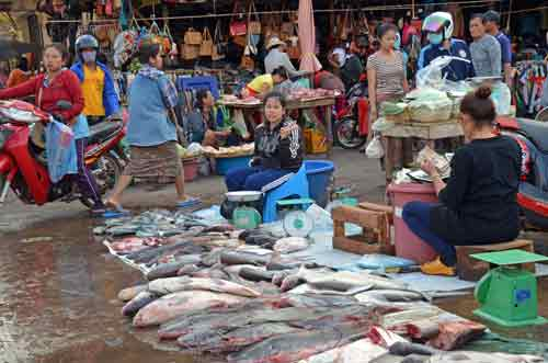 fish at pakse market-AsiaPhotoStock