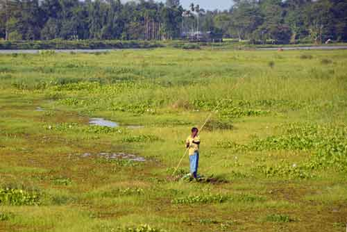 fishing in field-AsiaPhotoStock