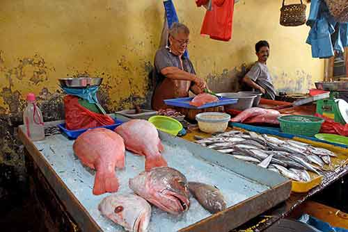 fresh fish-AsiaPhotoStock