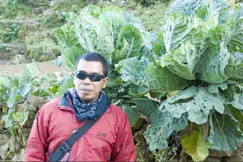 giant cabbage-AsiaPhotoStock