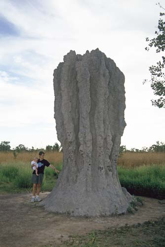 giant termite hill-AsiaPhotoStock