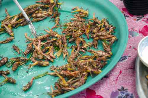grasshoppers snack-AsiaPhotoStock