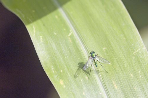 green fly-AsiaPhotoStock