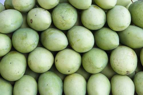 green mangoes-AsiaPhotoStock