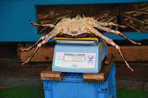 king crab hakodate-AsiaPhotoStock