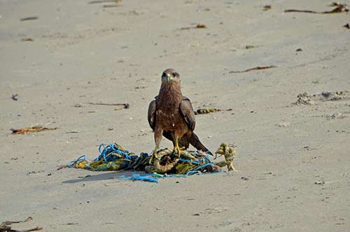 kite on beach-AsiaPhotoStock