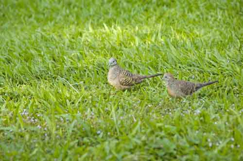 little bronze cuckoos-AsiaPhotoStock