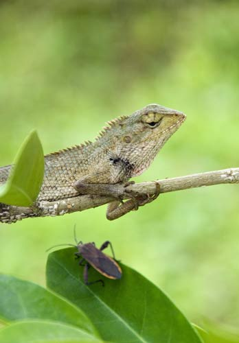 lizard and bug-AsiaPhotoStock