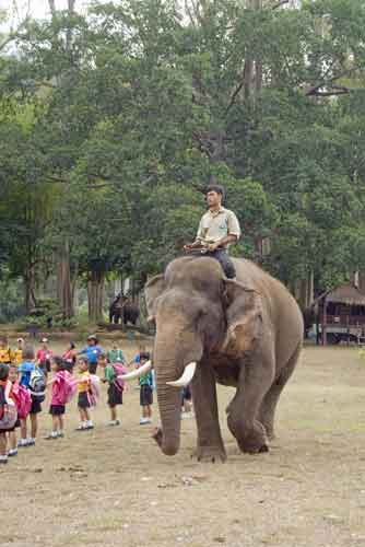 mahout on thai elephant-AsiaPhotoStock