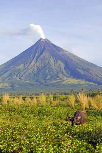 carabao at mt mayon-AsiaPhotoStock