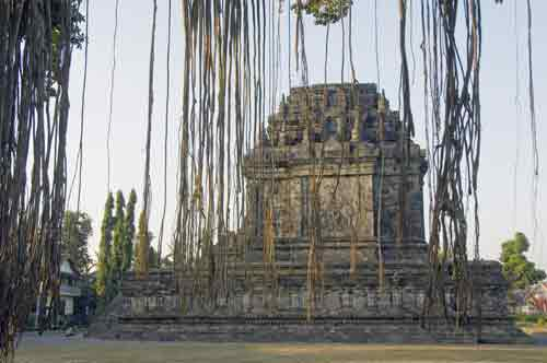 mendut temple tree-AsiaPhotoStock